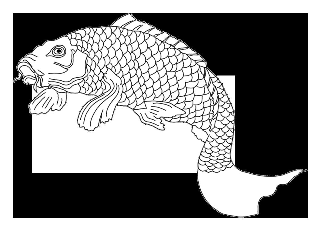 Koi fish sketch black white