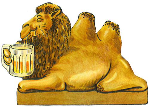 thirsty kamel drinking beer