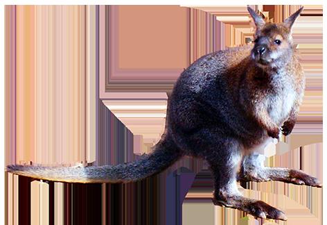 animal cut-out of kangaroo
