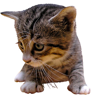 kitten cut-out clipart
