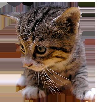 kitten cut-out clipart