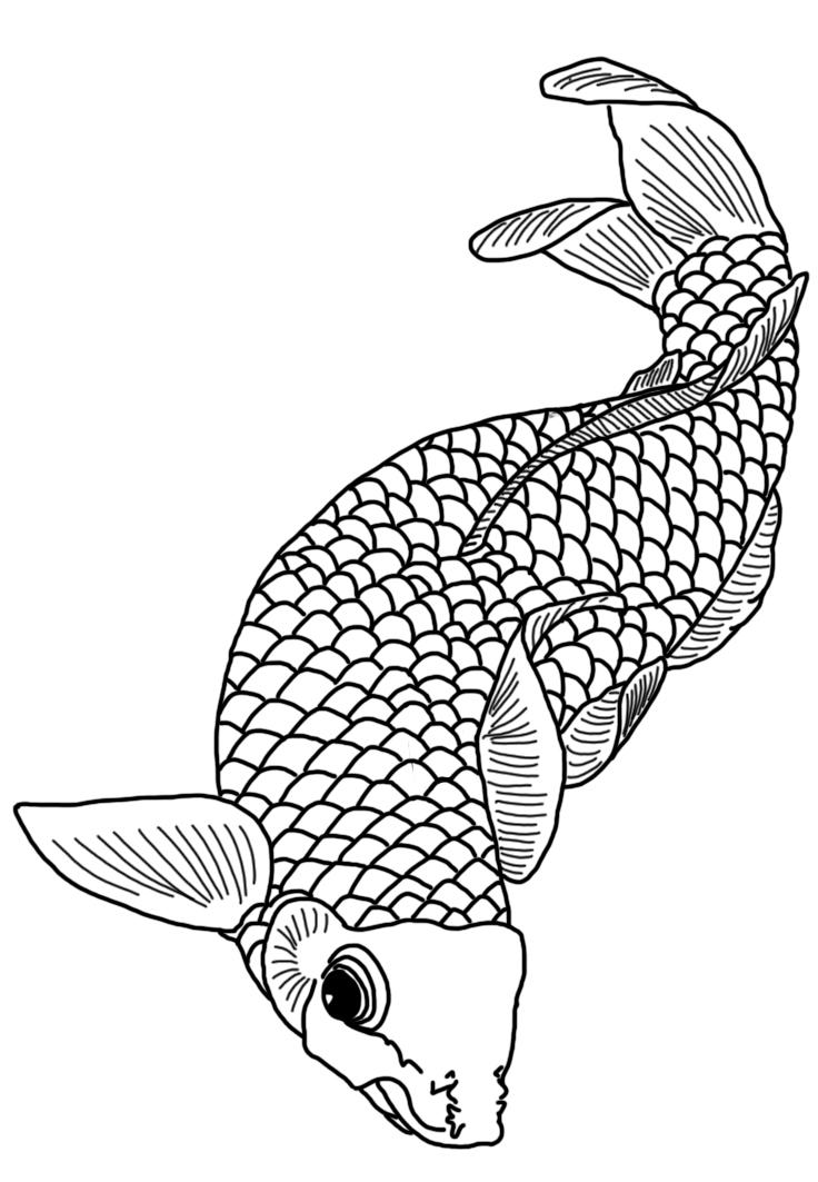 black white koi fish drawing