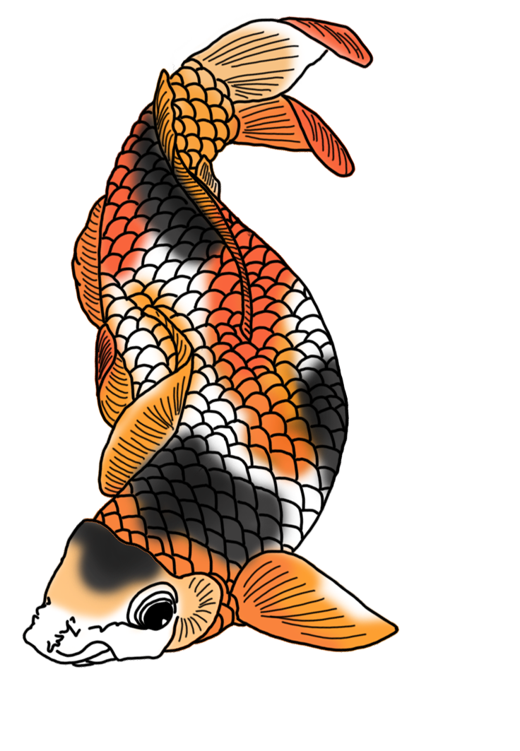 black white red orange koi fish