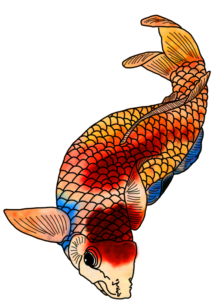koi fish drawing with strong colors