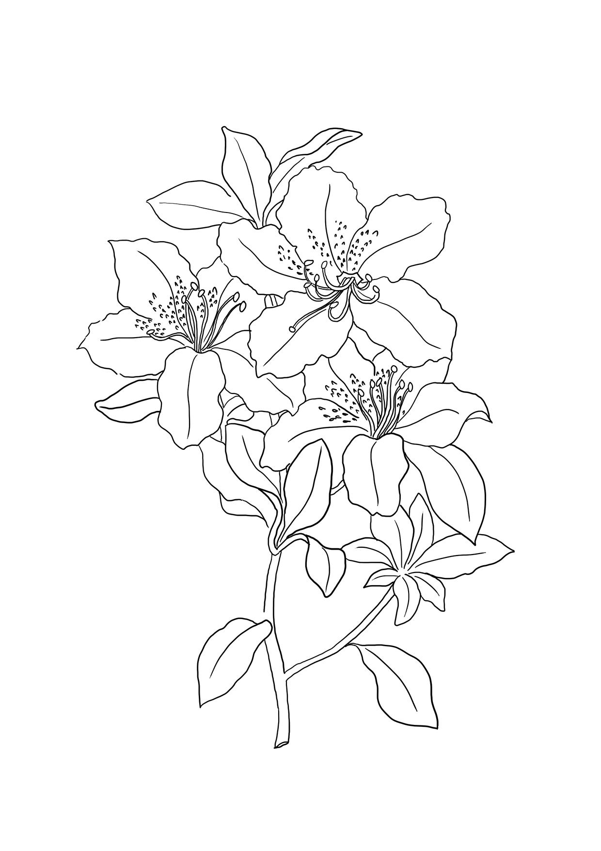 Lily Coloring Pages Flower Coloring Pages