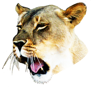 clipart of female lion head
