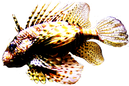 lion fish clip art