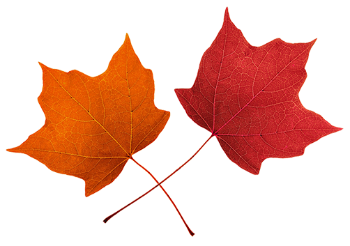 Orange Fall Leaves Clip Art