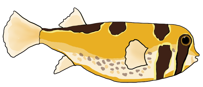 masked porcupinefish drawing
