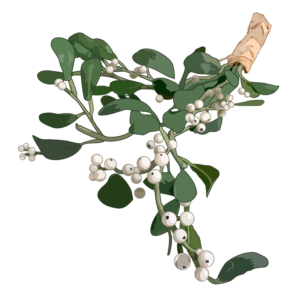 mistletoe for Christmas clipart