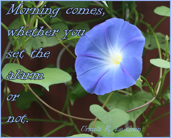 good morning quote with blue flower