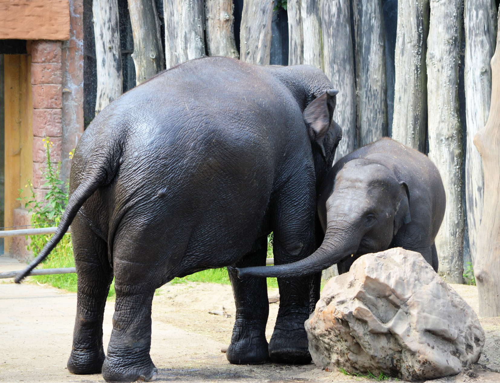 mother and baby elephant in zoo