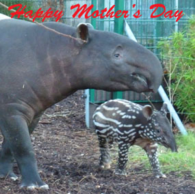mothers day clip art tapir mother and child
