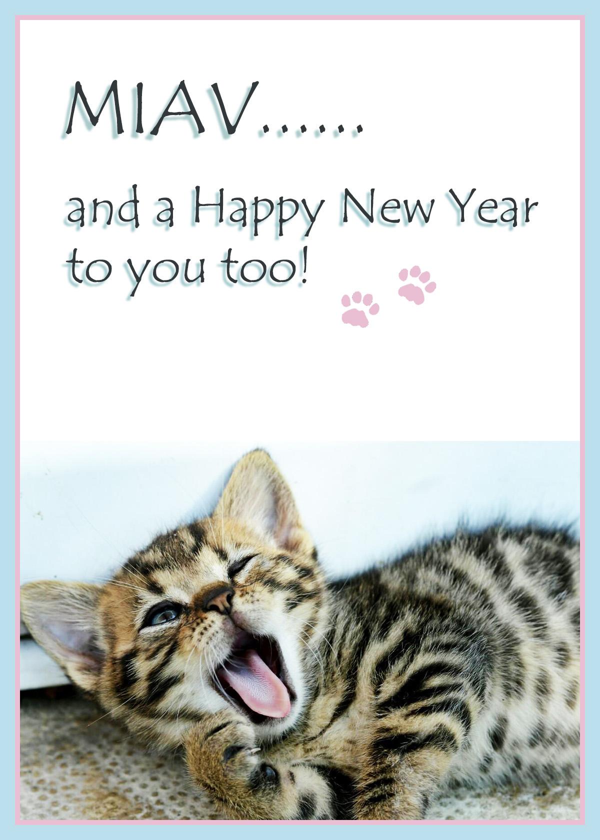 Sleepy kitten wishing you a happy New Year