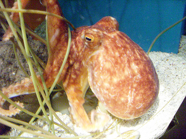 octopus picture in zoo
