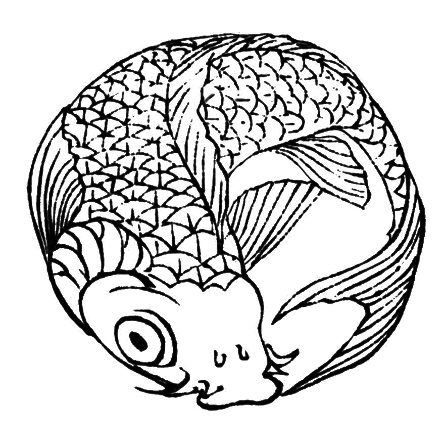 old Japanese koi fish sketch