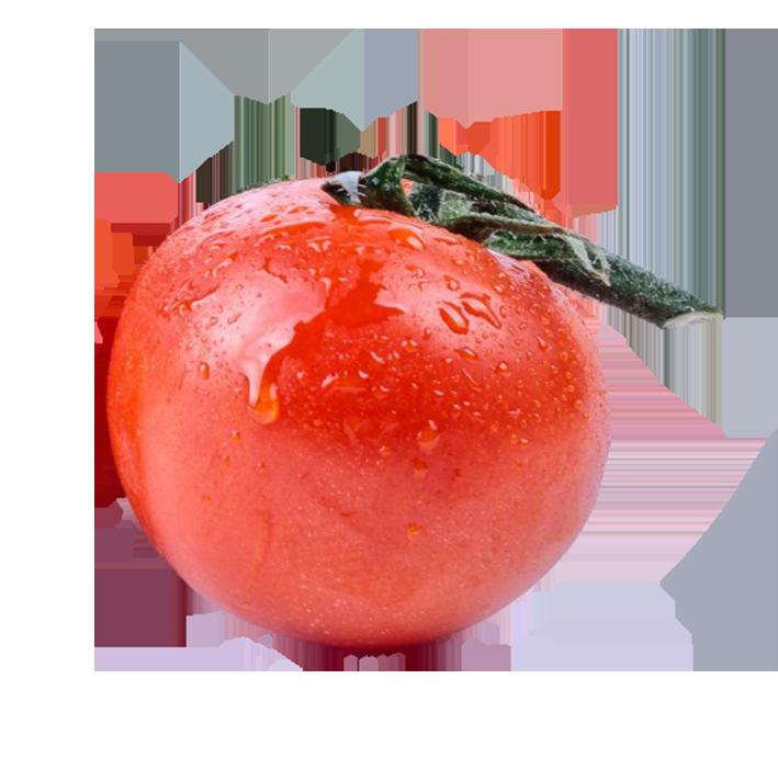Single tomato clipart