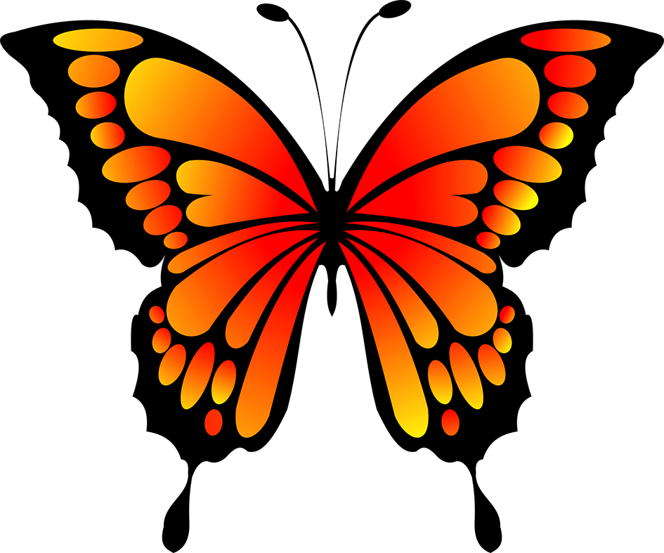 orange and black butterfly image