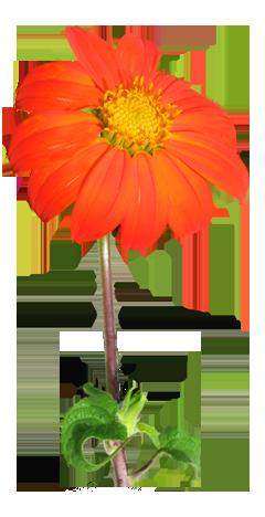 Flower Image Gallery