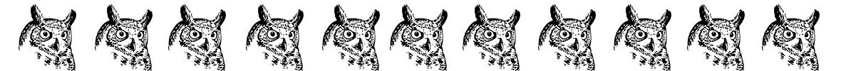 owl border owl's head