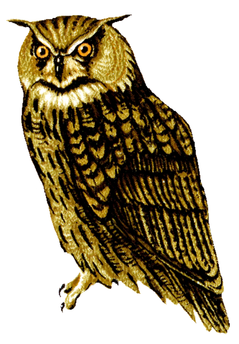 owl drawings horned owl