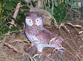 plastic owl in garen clip art