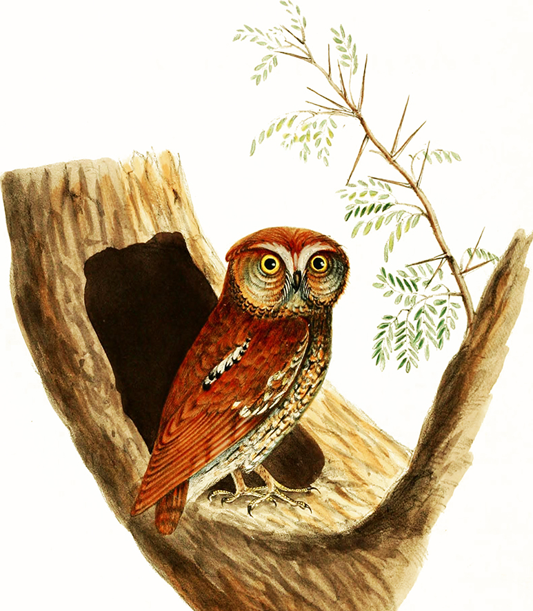 picture of owl in a tree