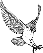 owl pictures barn owl swooping drawing