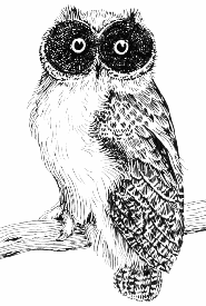 owl drawings sketch
