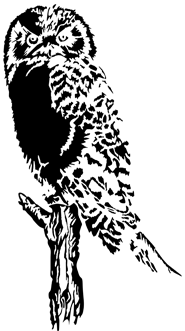 owl drawings black white