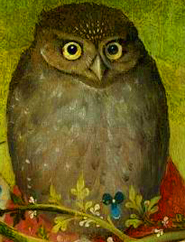 owl pictures painting