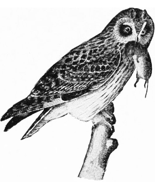 Owl clip art for Owl beak drawing