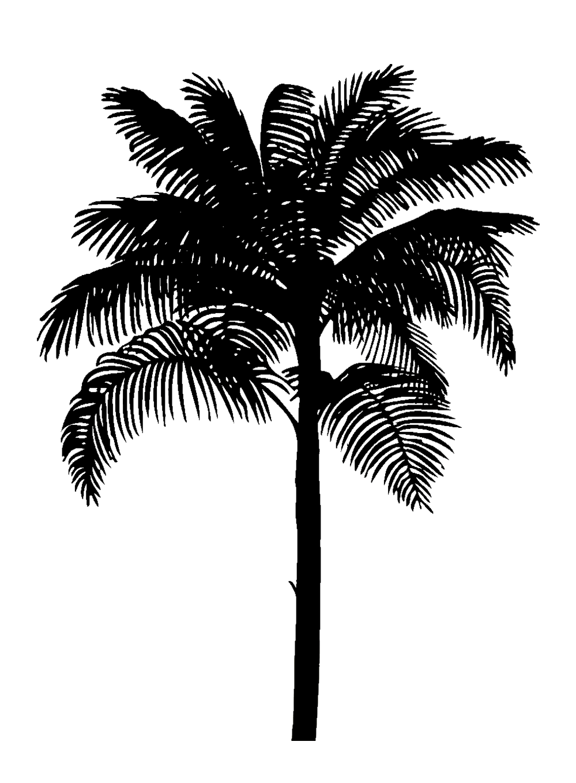 black silhouette palm tree
