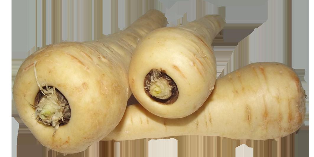 parsnips clipart