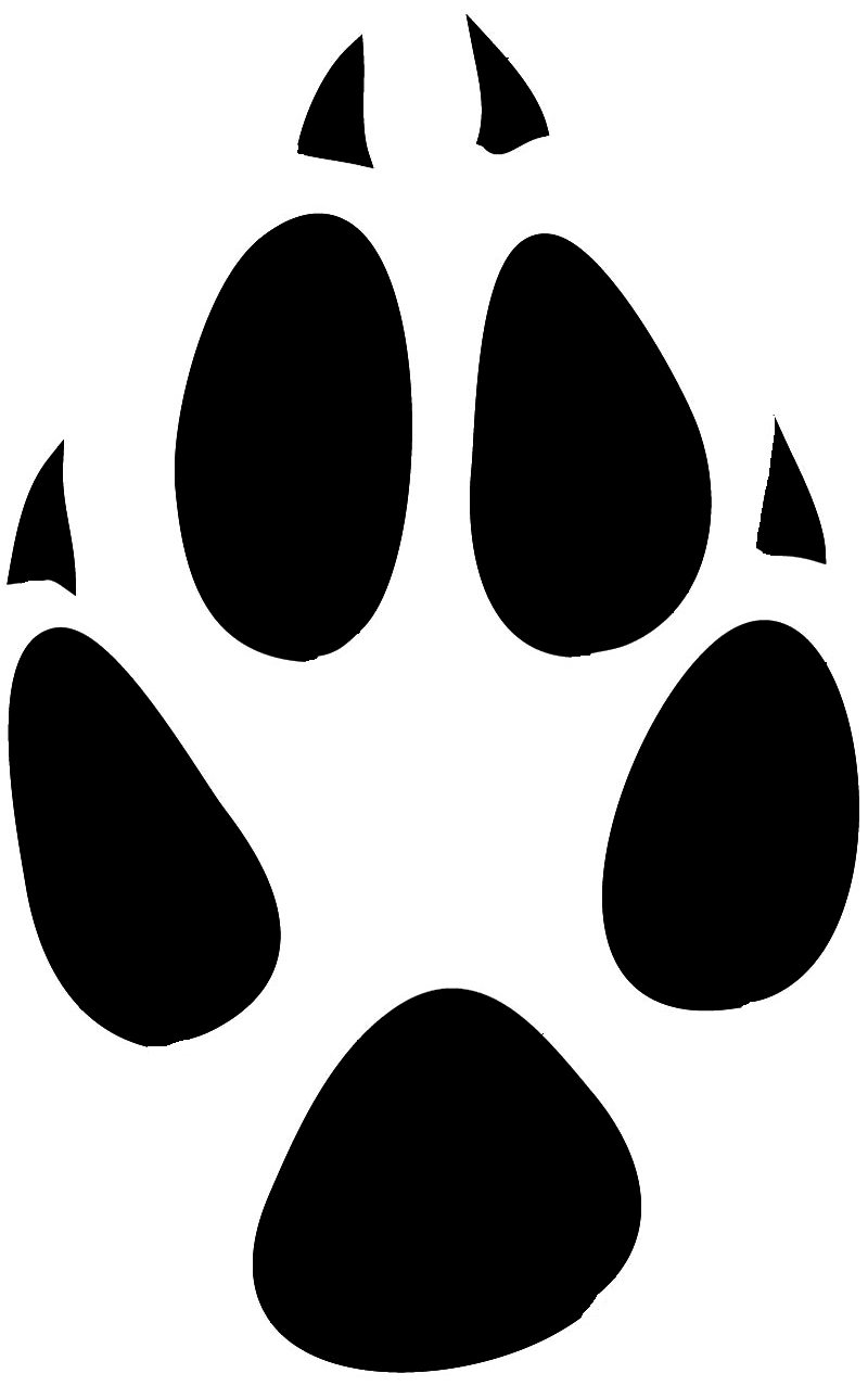 paw print from fox