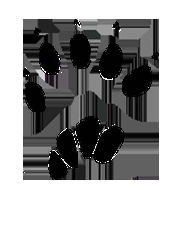 squirrel paw print 20-25 mm