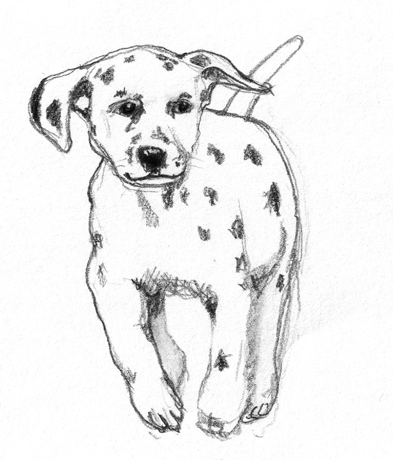pencil drawing of Dalmatian puppy