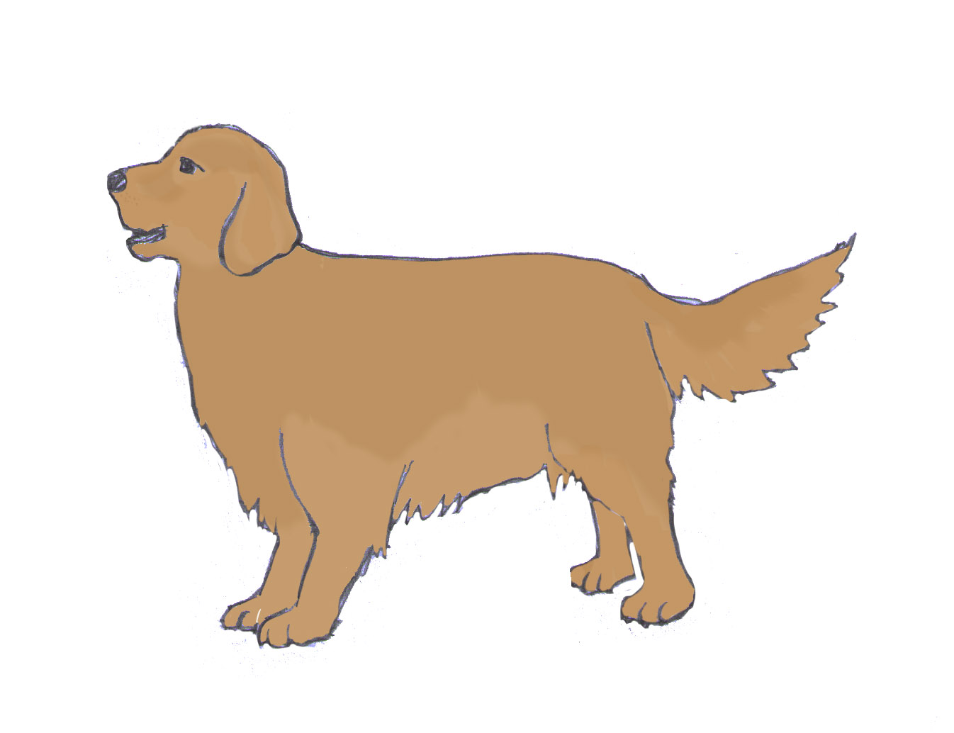 How To Draw A Good Dog