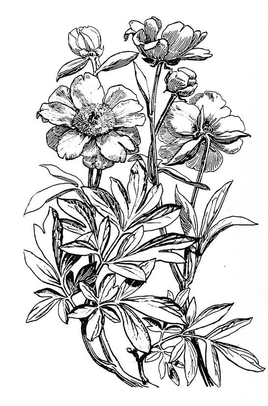 Flower images in black and white newwallpapers flower sketches mightylinksfo
