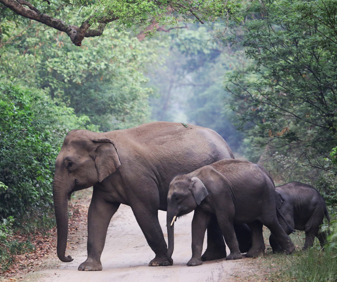 picture of elephants in nature
