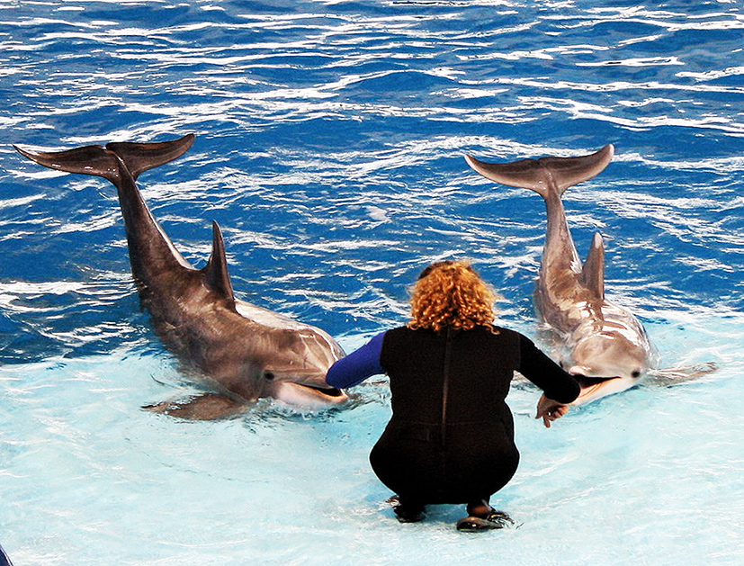 dolphins and trainer