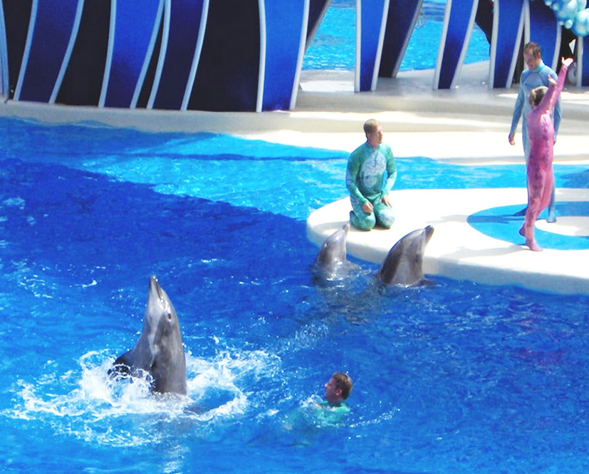 training dolphins