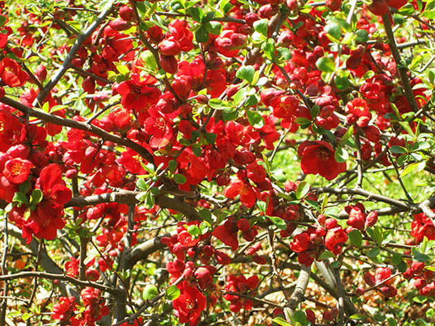 pictures of flowers on branch red