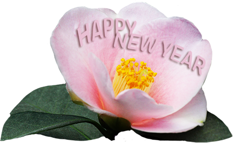New Year greeting with pink flower