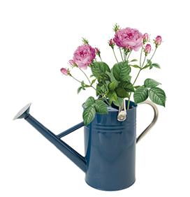 blue water can clipart with roses