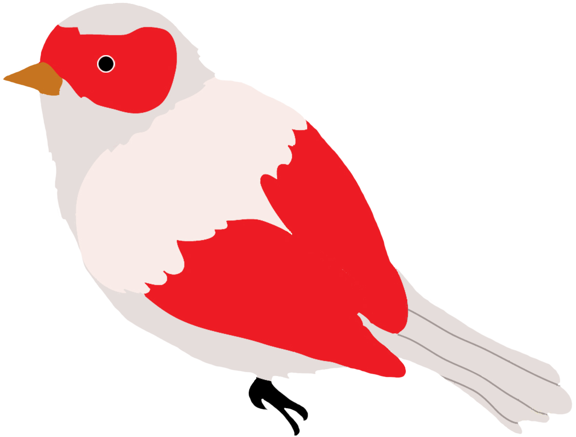 red and grey colored bird drawing