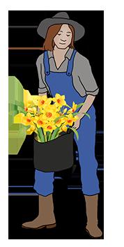 gadener planting daffodils