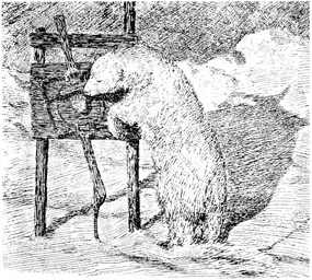 polar bear clipart old drawings 1897