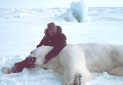 polar bear facts sedated polar bear man