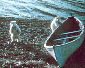 polar bear cubs oprhans